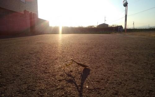 夕日とカマキリ