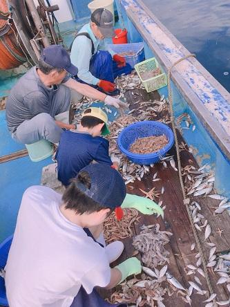 初漁業体験