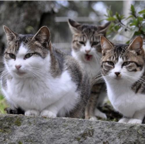 築地市場に残された野良猫たち
