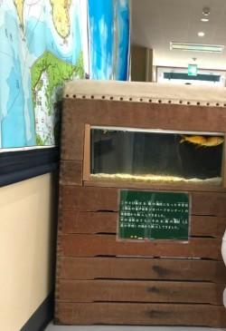 『むろと廃校水族館』
