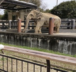 徳島動物園