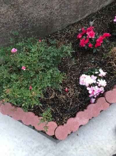 我が家の庭には季節の花が植わっています